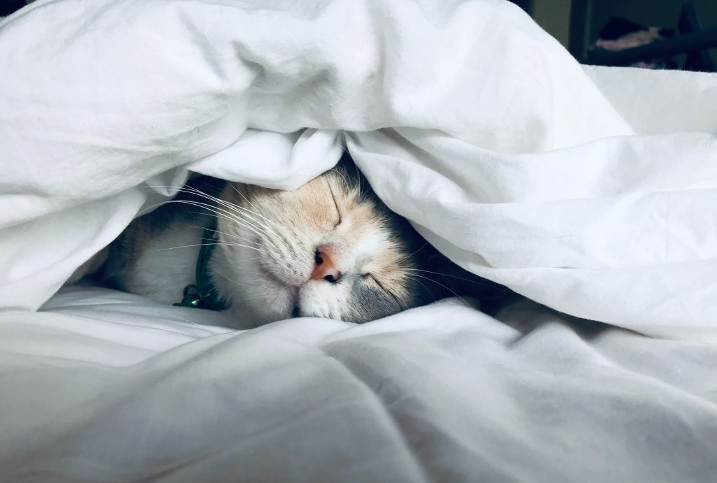 Ignoring sleep